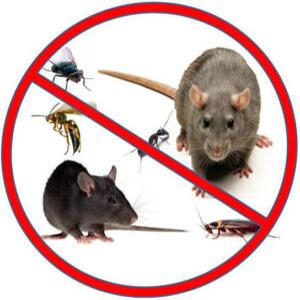 خدمات مكافحة الحشرات بالدمام